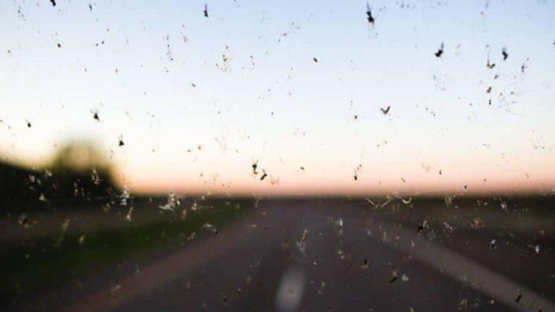 pare-brise-insectes-moustiques-saletés-vitres-fenêtre