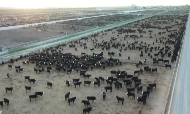 loom cuir feedlot